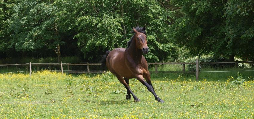Ein Pferd in der Weidesaison