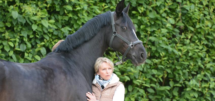 Die Rückenmuskulatur des Pferdes