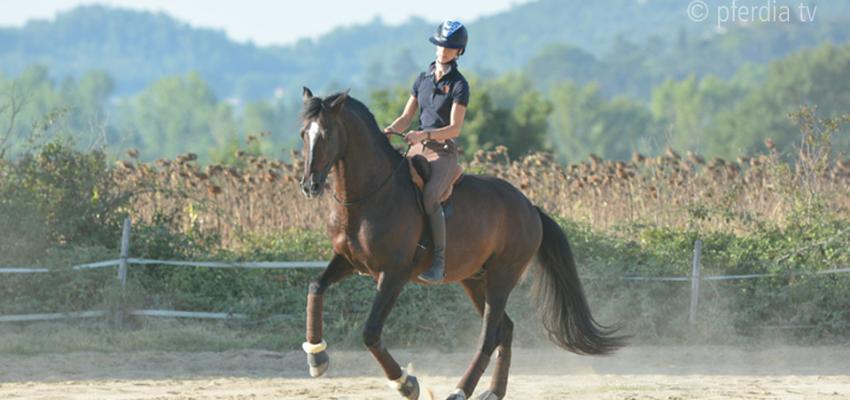 Alizée Froment reitet ohne Zaumzeug