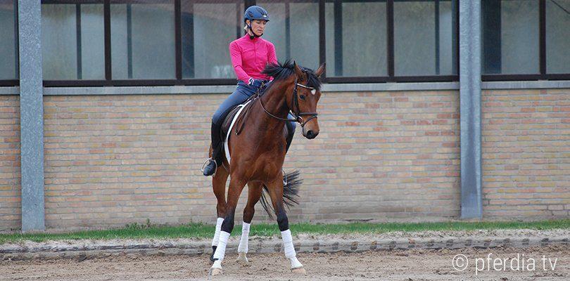 Konzentration von Reiter und Pferd beim Kurzkehrt reiten