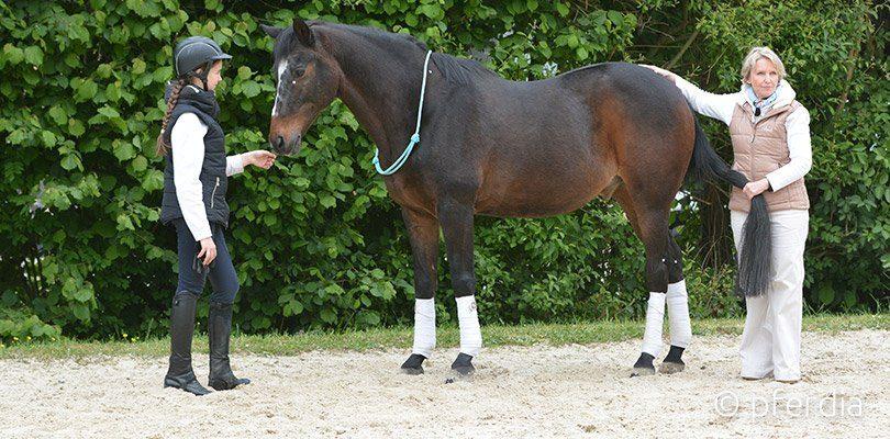 Ina Gösmeier ist Expertin für Akupressur beim Pferd