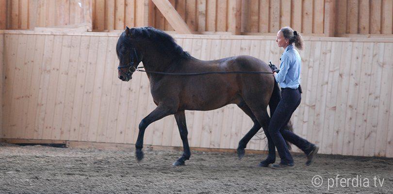 Saskia Gunzer arbeitet ein Pferd am Langzügel