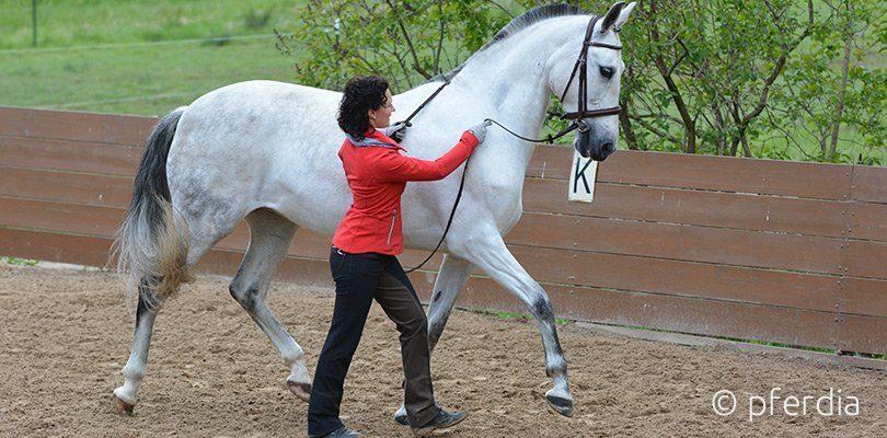 Beispiel Handarbeit Pferd mit Kathrin Roida