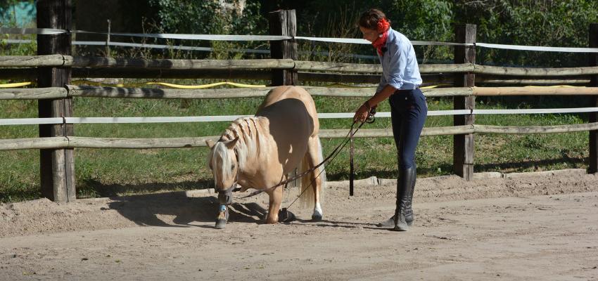 Das Pony reagiert in der Freiarbeit auf die Körpersprache