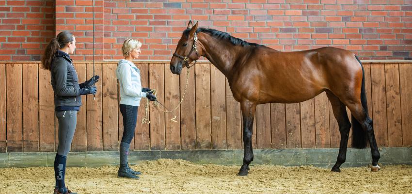 Ohne Druck das Pferd rückwärtstreten lassen