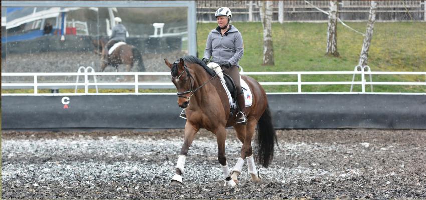 Das Pferd ist geradegerichtet wenn es am Ende seiner Ausbildung nach den Grundsätzen der Skala der Ausbildung angekommen ist