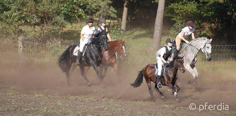 Gruppe beim Jagdreiten