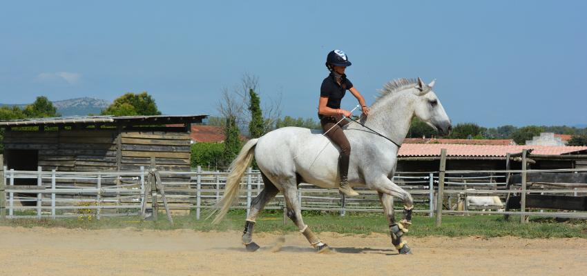 Beim Ohne-Sattel Reiten können Hilfen noch feiner gegeben werden und die Pferde reagieren oft williger darauf