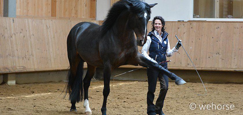 Handarbeit Pferd im spanischen Schritt