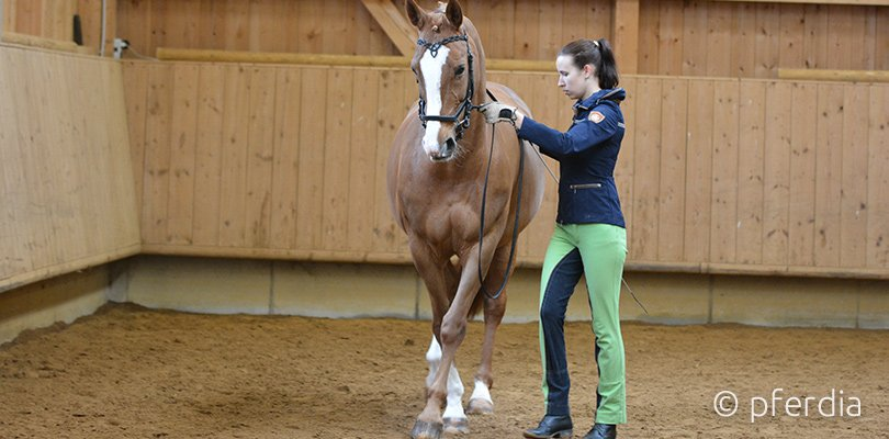 Handarbeit mit Pferd: Übertreten lassen üben