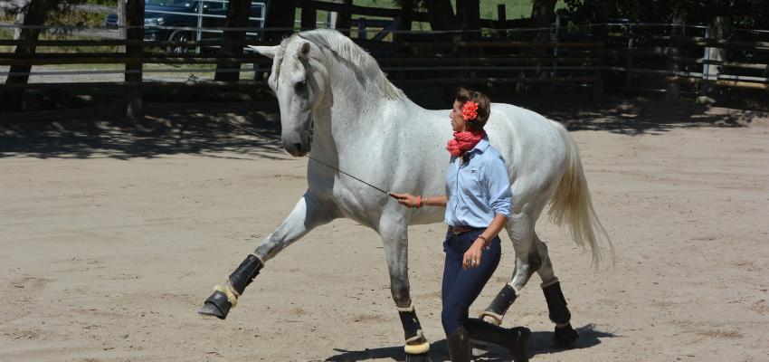 Das Pferd hat Spaß an der Freiarbeit und ist motiviert