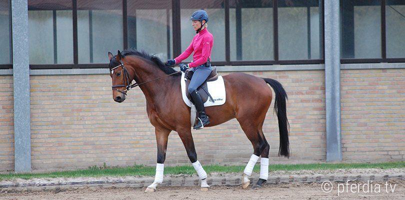Ingrid Klimke uebt das Kurzkehrt mit ihrem Jungpferd Just Paul