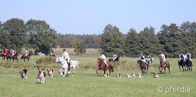 Jagdreiten im Gelaende