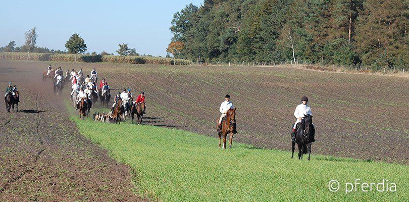 Jagdreiten auf dem Feld