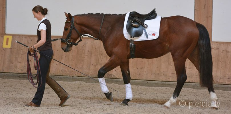 Junge Pferde ausbilden Warmblut