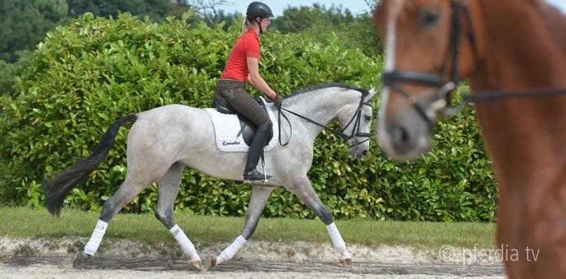 Eine Schülerin von Ingrid Klimke beim Einreiten eines jungen Pferdes