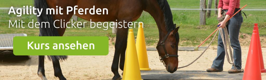 wehorse Kurs zum Clickertraining mit dem Pferd