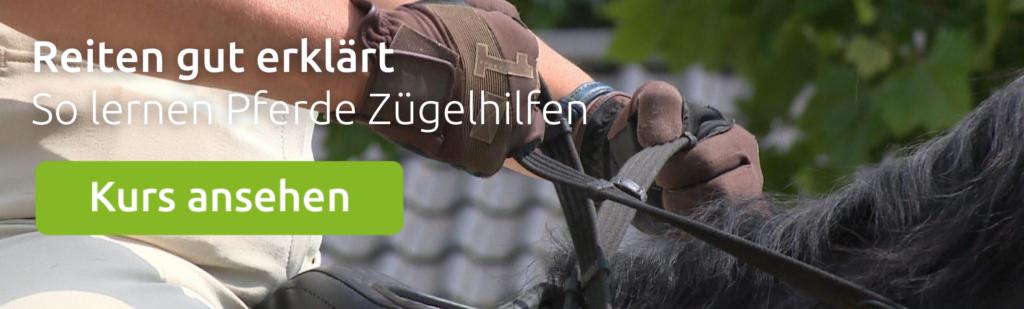 Kurs: So lernen Pferde Zügelhilfen