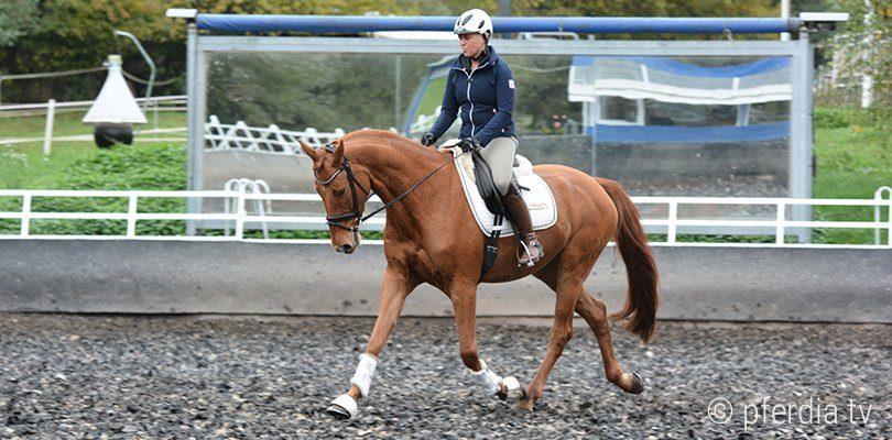 Lenny, das Pferd von Uta Gräf, rollt sich zu Beginn oft ein