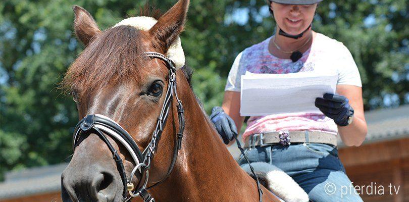 Das Lernverhalten des Pferdes spielt eine wichtige Rolle für die Zügelhilfen