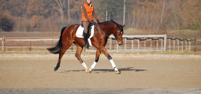 Ein losgelassenes Pferd steht am Anfang der Skala der Ausbildung