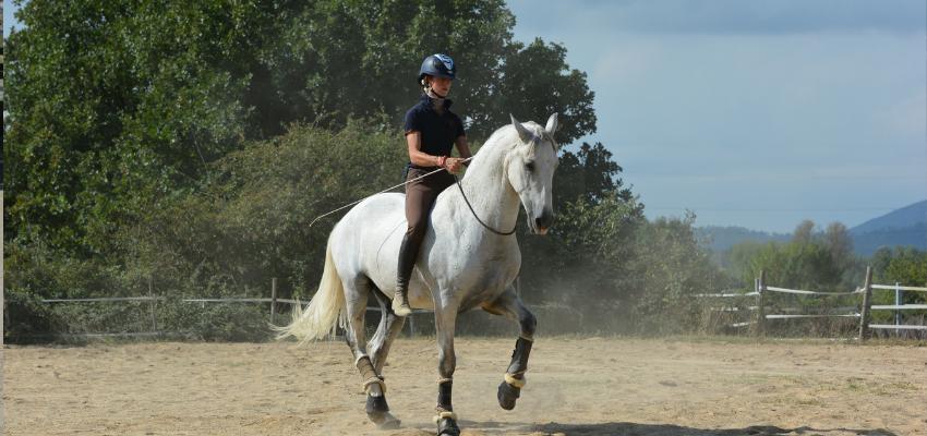 Alizée Froment macht vor wie es geht: Ohne Sattel reiten und nur mit Halsring- das geht auch in hohen Dressurlektionen