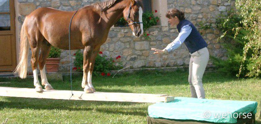 Pferd übt das Podest
