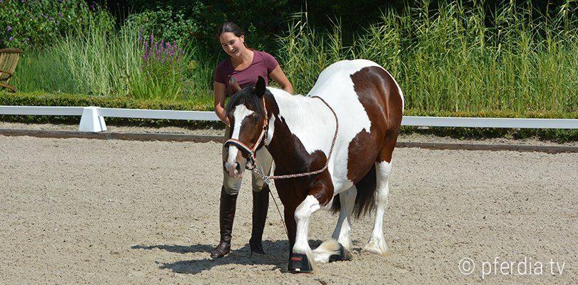 Pferd lernt Kompliment ohne Zügelhilfen