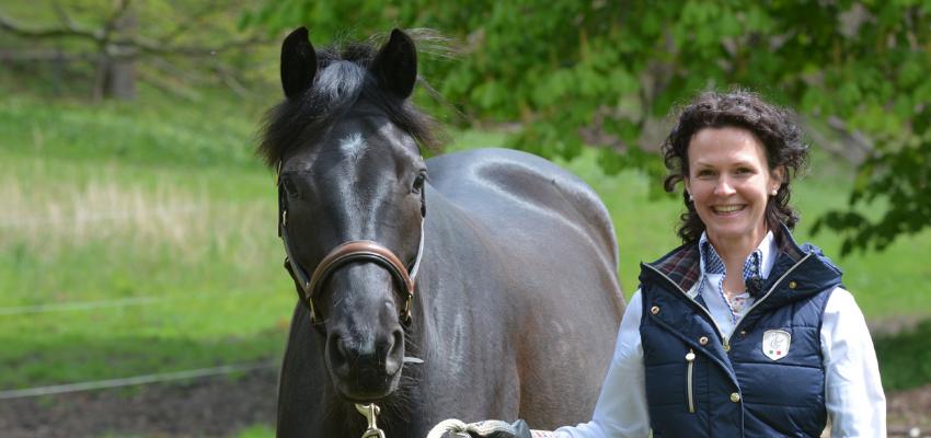 Führen üben als Teil der Pferdeerziehung