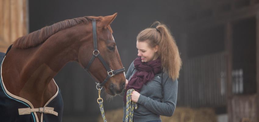 Eine gute Pferdeerziehung als Grundlage für eine harmonische Beziehung