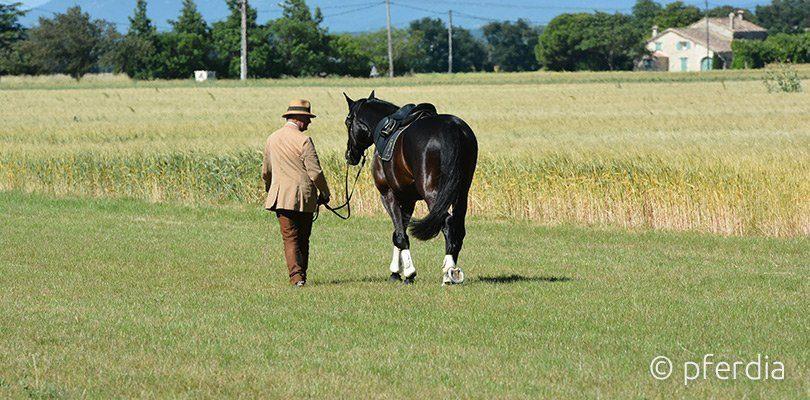 Philippe Karl geht mit Pferd spazieren