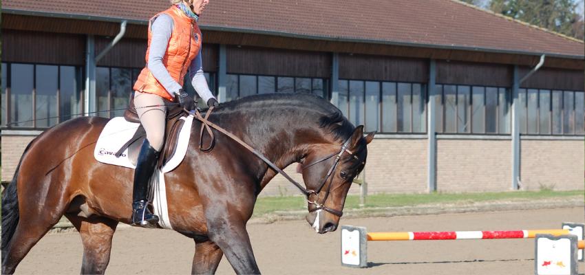 Um den Pferderücken zu schonen, sollte man viel in Dehnunghaltung reiten