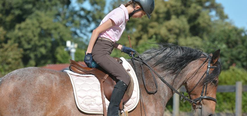Mit Franklinbällen zur feineren Reiterhand