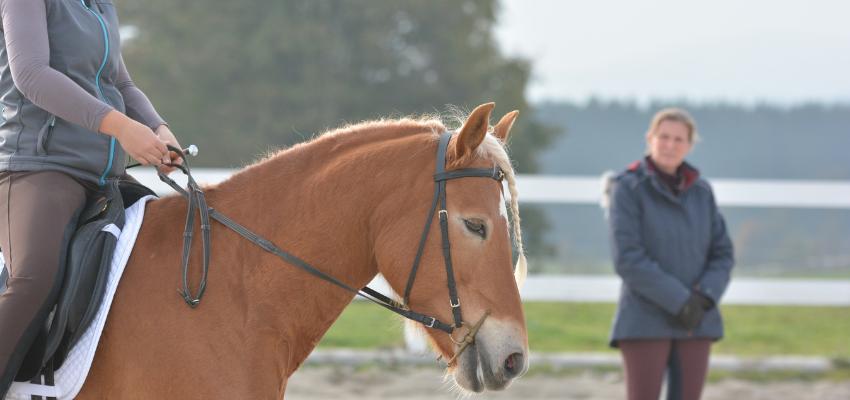 Sitzschulung für eine ruhigere Reiterhand