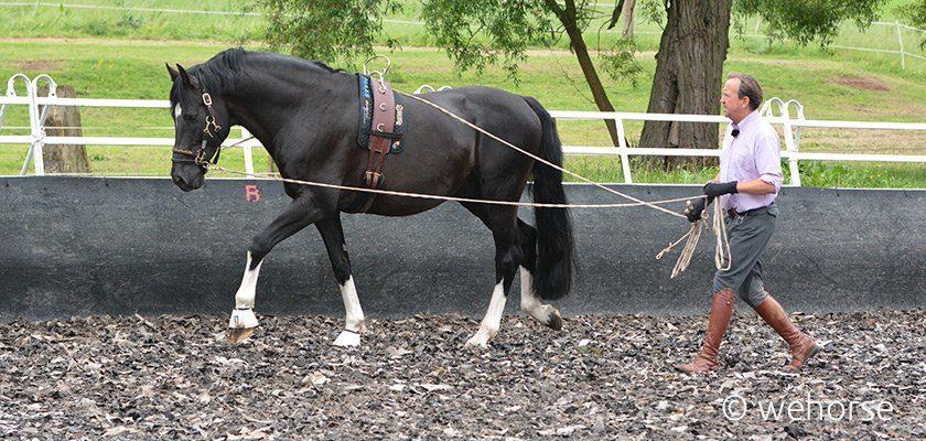 Vor dem Einreiten arbeitet Stefan Schneider mit dem Pferd am Langzügel
