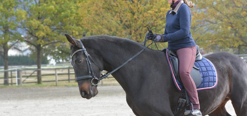 An einer rückwirkenden Reiterhand arbeiten