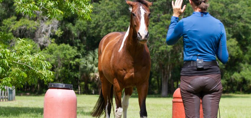 Hast du Angst vor deinem Pferd?