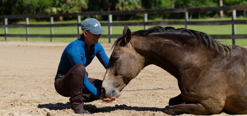 Das Vertrauen ins Pferd zurückgewinnen