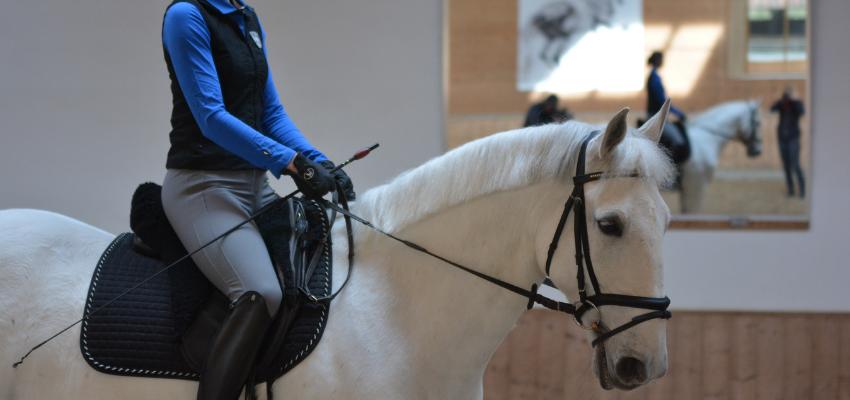 Ein gestelltes Pferd