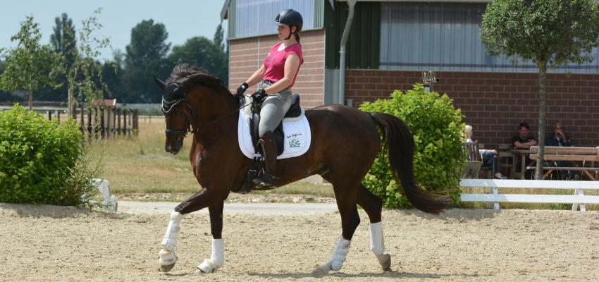 Die Reiterin biegt ihr Pferd