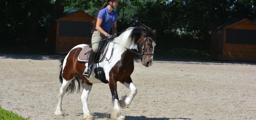 Reagiert dein Pferd klemmig am Bein?