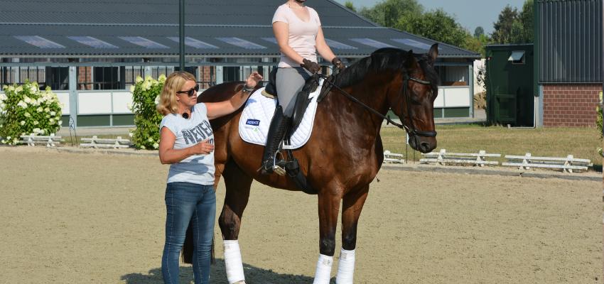 Das Pferd richtig an die Hand heranreiten
