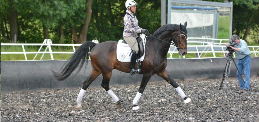 Ein Pferd das für den Mitteltrab vorbereitet wird