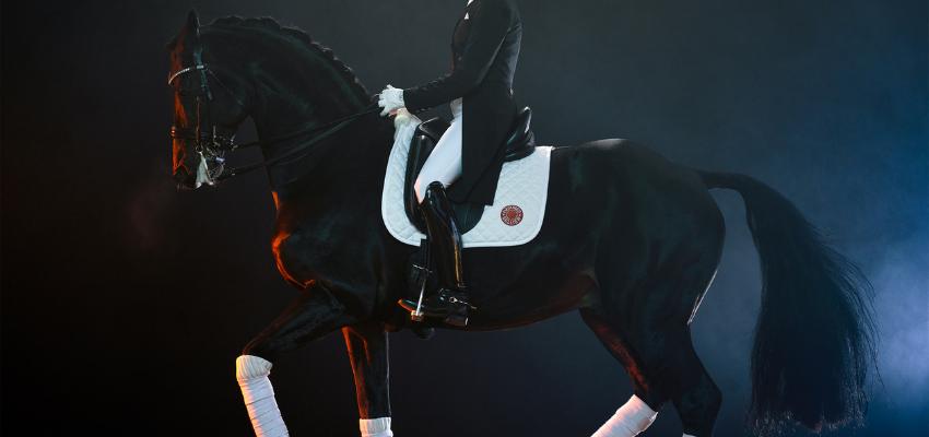 Das Pferd scheut? So wird dein Turnierstart trotzdem ein Erfolg