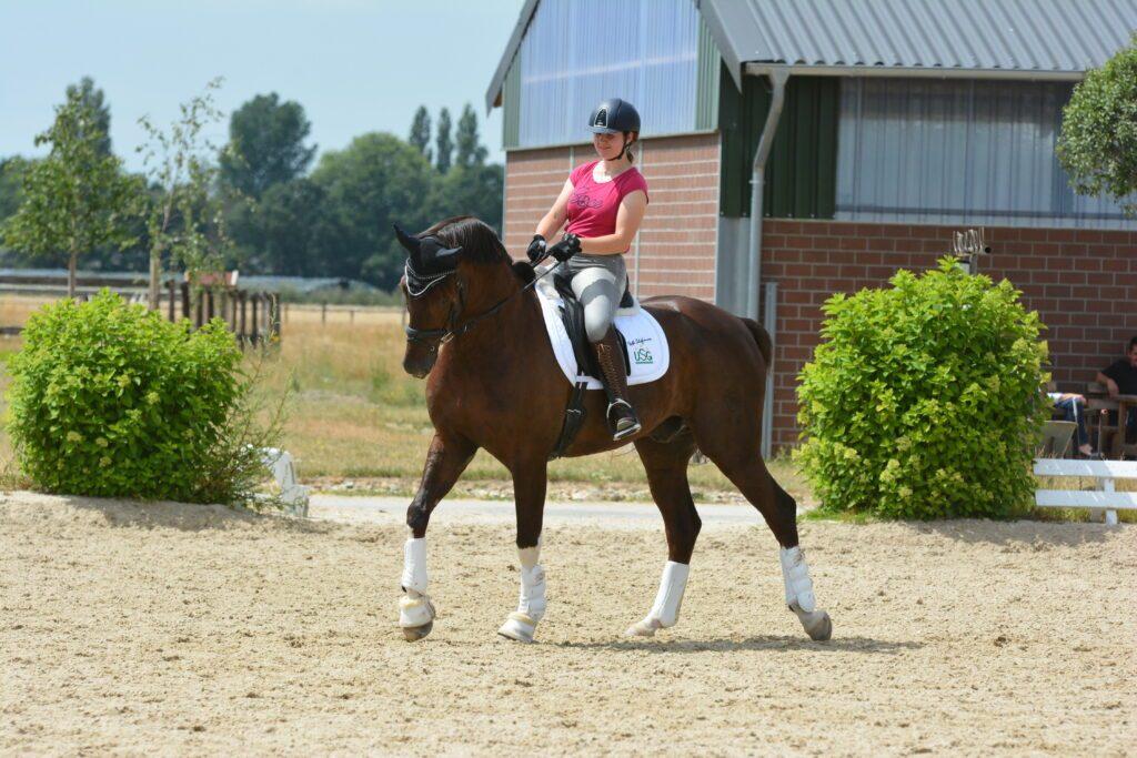 Das Pferd durch korrektes Treiben fleißig am Bein machen