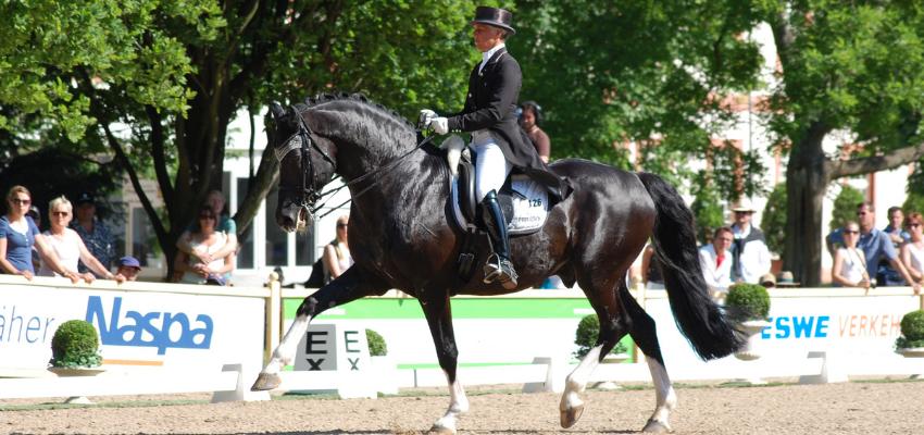 Uta Gräf behält auf dem Turnier immer das Pferdwohl im Blick