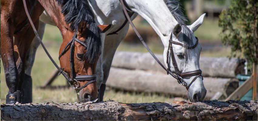 Vielseitigkeit ist gut für die Ausbildung von Reiter und Pferd