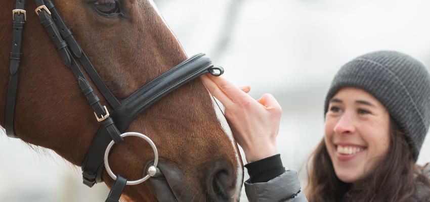 Pferd bei Verletzungen versorgen