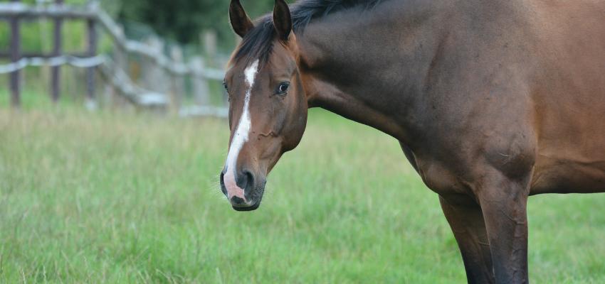 Bei der Pferdefütterung ist es wichtig zu beachten, dass das Pferd lieber dünner als dicker ist