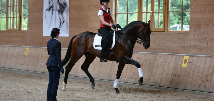 Pferdegerechtes Reiten und Ausbilden